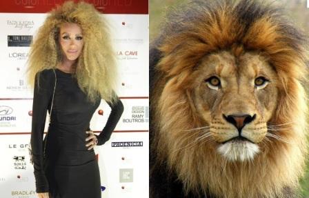 maya-diab-lion